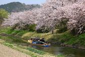 春(3) 似是故人來:0280.JPG 近江八幡水鄉めぐり