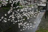 日本櫻花(14) 哲學之道與蹴上鐵道:0850.jpg 哲學之道