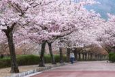 春(5) 幾度花落時:0474.JPG 和らぎの道