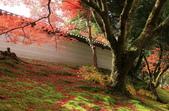 2010日本關西(3)京都東郊楓葉盟:0314.jpg  京都 曼殊院