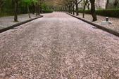 春(5) 幾度花落時:0479.JPG 和らぎの道
