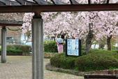春(5) 幾度花落時:0484.JPG 和らぎの道