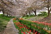 春(2) 藝界人生:0172.JPG 江川せせらぎ緑道