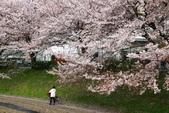 春(2) 藝界人生:0166.JPG 江川せせらぎ緑道