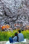 春(1) 似水流年:0028.JPG 熊谷桜堤