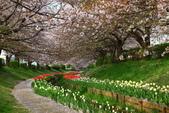 春(2) 藝界人生:0170.JPG 江川せせらぎ緑道