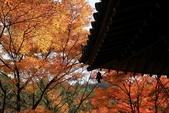 2010日本關西(4)可愛的愛宕念佛寺:0429.jpg 京都 愛宕念佛寺