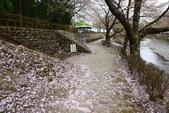 春(5) 幾度花落時:0491.JPG 和らぎの道