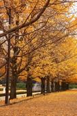北國之秋(二) 秋詩篇篇:0230.jpg 昭和記念公園