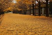 北國之秋(二) 秋詩篇篇:0227.jpg 昭和記念公園