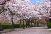 春(5) 幾度花落時:0477.JPG 和らぎの道