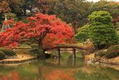 秋之戀(三) 庭園、森林、往事如昨:0149.jpg 六義園