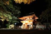 秋之戀(14) 京都秋夜:0853.jpg 坂本地区日吉大社