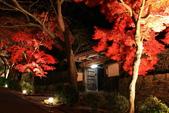 秋之戀(14) 京都秋夜:0863.jpg 坂本地区西教寺