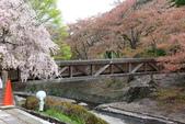 春(5) 幾度花落時:0488.JPG 和らぎの道