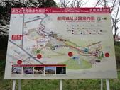 春(7) 美麗的零落:0945.JPG 船岡城址公園