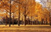 旅 遊 精 選:0091.jpg (2014-11-24 茨城県立歴史館)