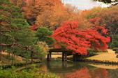 秋之戀(三) 庭園、森林、往事如昨:0138.jpg 六義園