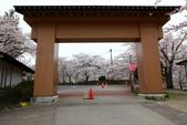 春(7) 美麗的零落:0953.JPG 船岡城址公園