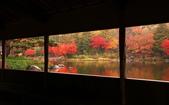 旅 遊 精 選:0266.jpg (2014-11-25 東京都 国営昭和記念公園)