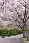 春(5) 幾度花落時:0478.JPG 和らぎの道