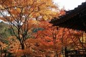 2010日本關西(4)可愛的愛宕念佛寺:0430.jpg 京都 愛宕念佛寺