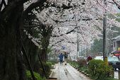日本櫻花(14) 哲學之道與蹴上鐵道:0854.jpg 哲學之道