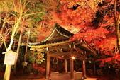 秋之戀(14) 京都秋夜:1294.jpg 京都永観堂
