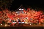 秋之戀(14) 京都秋夜:1299.jpg 京都永観堂