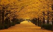 旅 遊 精 選:0250.jpg (2014-11-25 東京都 国営昭和記念公園)