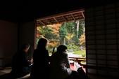 2010日本關西(3)京都東郊楓葉盟:0310.jpg  京都 曼殊院