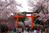 日本櫻花(11) 京都平野神社與嵐山:0697.jpg 平野神社