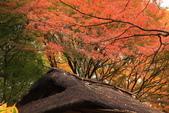 秋之戀(三) 庭園、森林、往事如昨:0144.jpg 六義園