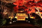 秋之戀(14) 京都秋夜:0865.jpg 坂本地区西教寺