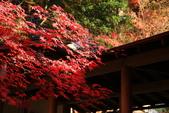 秋之戀(11) 由洛西到洛北:1183.jpg 大原野神社