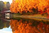 秋葉鐵道(三) 晴空鐵道:0338.JPG 栃木県中央公園