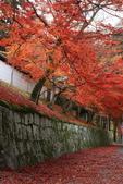 2010日本關西(3)京都東郊楓葉盟:0296.jpg  京都 曼殊院