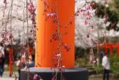 日本櫻花(11) 京都平野神社與嵐山:0701.jpg 平野神社