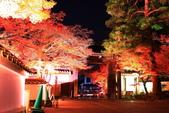 秋之戀(14) 京都秋夜:1300.jpg 京都永観堂