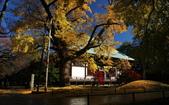 旅 遊 精 選:0455.JPG (2014-11-27 九品仏寺)