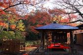 秋之戀(11) 由洛西到洛北:1178.jpg 大原野神社