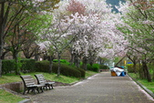 春(5) 幾度花落時:0470.JPG 和らぎの道