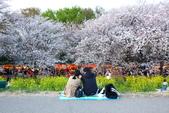 春(1) 似水流年:0026.JPG 熊谷桜堤