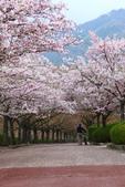 春(5) 幾度花落時:0475.JPG 和らぎの道