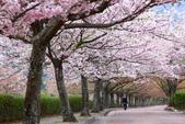 春(5) 幾度花落時:0476.JPG 和らぎの道
