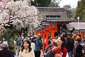 日本櫻花(11) 京都平野神社與嵐山:0702.jpg 平野神社