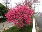 春(2) 藝界人生:0159.JPG 県道13号線