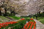 春(2) 藝界人生:0174.JPG 江川せせらぎ緑道