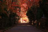 秋之戀(11) 由洛西到洛北:1175.jpg 大原野神社