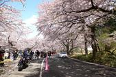 春(6) 春的禮讚:0696.JPG 滋賀.海津大崎